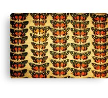 The Butterfly Collection 6 Canvas Print