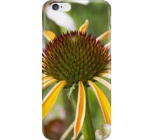echinacea in garden iPhone Case/Skin