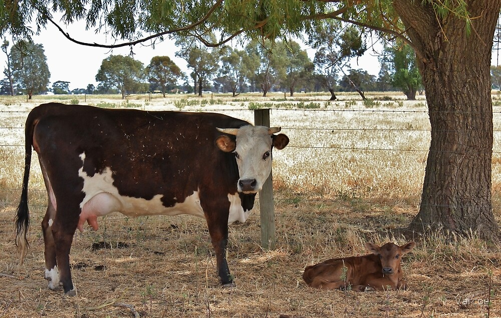 Born Yesterday. by Jeanette Varcoe.