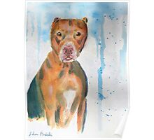 Red Nose Pit Bull Loose Watercolor Portrait Poster