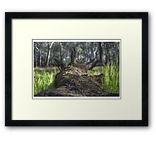 Fallen Log HDR Framed Print