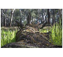 Fallen Log HDR Photographic Print