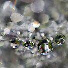 Water 2 by Rebecca Cozart