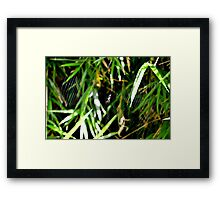 Wonderful Web Framed Print