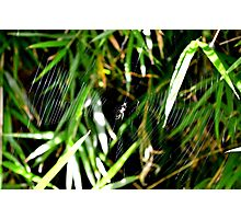 Wonderful Web Photographic Print