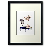 trampolining pussie's Framed Print