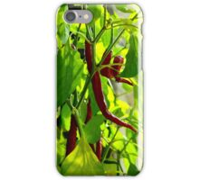 a little Chilli out here... iPhone Case/Skin