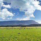 Great Western Tiers, Cressy, Tasmania, Australia by photosteak