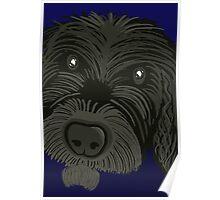 Scruffy Dog Poster