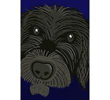 Scruffy Dog Photographic Print
