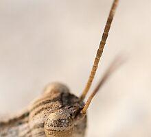 Grasshopper eye by Antonio Jose Pizarro Mendez