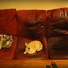 Couch Cats by Margaret Bryant