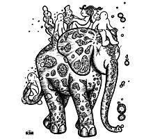 KIN - SLONE THE ELEPHANT 01 Photographic Print