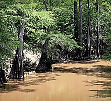 Black Cypress Creek by Betty Northcutt