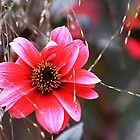 The Pink Red Flower by rennaisance