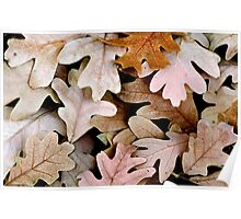 White Oak Leaves Poster