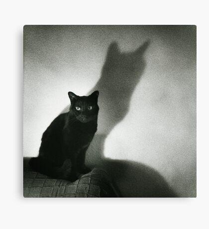 Portrait of black cat on sofa film noir chiaro scuro black and white square silver gelatin film analog photo Canvas Print