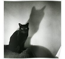 Portrait of black cat on sofa film noir chiaro scuro black and white square silver gelatin film analog photo Poster