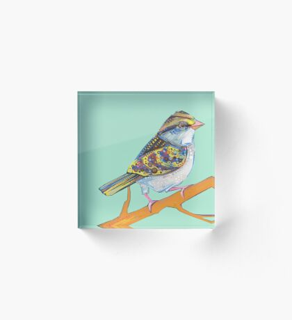 White-throated sparrow on blank background Acrylic Block