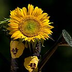 Yello Sunflower Bouquet by Christina Rollo
