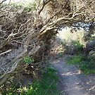 tea tree tunnel by jayview