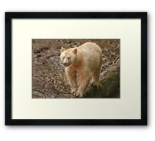 Spirit bear raspberry Framed Print