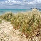 sea grass and sand by jayview