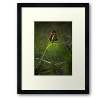 Impression with brown butterfly Framed Print