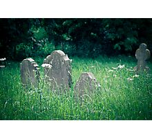 Sleeping in the Long Grass Photographic Print