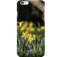 Pretty Daffodil Landscape iPhone Case/Skin