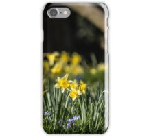 Pretty Daffodil Landscape iPhone Case/Skin