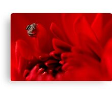 jumping spider and red dalhia Canvas Print