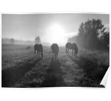 Horse Herd Grazing in a Sunrise Mist Poster