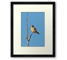 Hawk eye on the look out Framed Print