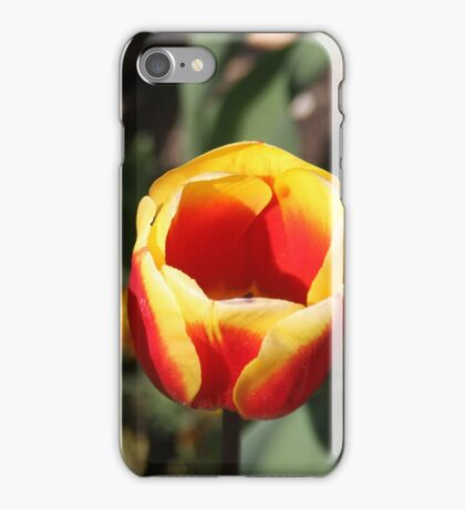 Orange and yellow tulips iPhone Case/Skin