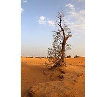 Nature's Challenge Photographic Print