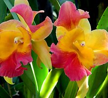 Orchid - 3 (Double Take)    ^ by ctheworld