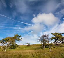 Beautiful sky & wind swept trees by M.S. Photography/Art