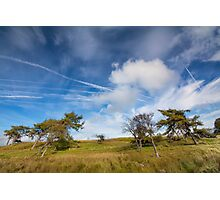 Beautiful sky & wind swept trees Photographic Print