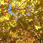 Yellow Leaves by WildestArt