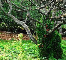 Royal Botanic Garden (Edinburgh)_3 by dyanera
