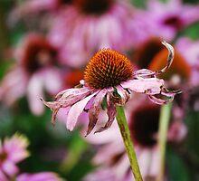 Royal Botanic Garden (Edinburgh)_4 by dyanera