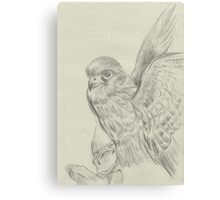 kestrel sketch Canvas Print