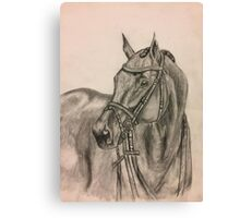 Bridled Horse Canvas Print