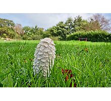 Fungi In The Grass Photographic Print
