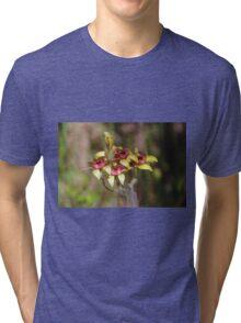 Dancing Spider Orchid, Caladenia discoidea Tri-blend T-Shirt