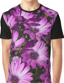 Purple African Daisies Graphic T-Shirt