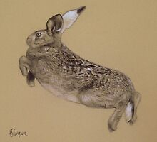 Leaping Hare by Francesca Simpson