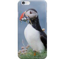 Atlantic puffin (Fratercula arctica) iPhone Case/Skin