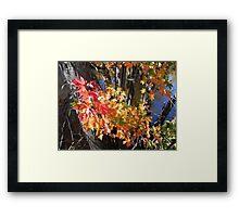 Autumn Colours Framed Print